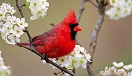 RED-BIRDslider-size